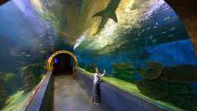 Requins de observation d'enfant chez Oceanarium banque de vidéos