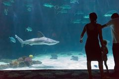 Requins de observation de famille à un zoo Photo libre de droits