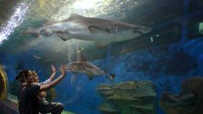 Requins de observation de mère et d'enfant chez Oceanarium banque de vidéos