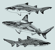 Requins tirés par la main Vecteur illustration de vecteur