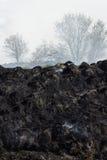 Resíduos queimados da grama Imagem de Stock