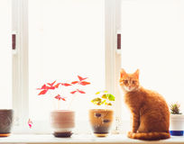 Red Cat Sitting On The Window Royalty Free Stock Photos