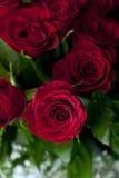 Res róże obrazy royalty free