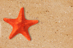 Res starfish on the yellow sand background Stock Photos