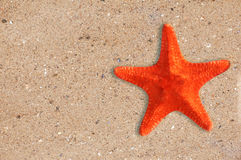 Res starfish on yellow sand background Royalty Free Stock Image