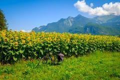Resa cykeln på bakgrunden av solrosfältet royaltyfri foto