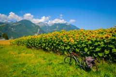 Resa cykeln på bakgrunden av solrosfältet arkivfoto