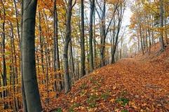 Resa i de JesenÃky bergen, Sternberk, Moravia Royaltyfri Bild