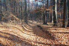 Resa i höstskogen på de jordstupade sidorna royaltyfri foto