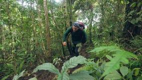 Resa mannen med ryggsäcken som går på den turist- mannen för djungelskog som fotvandrar i lös rainforest bland tropiska träd och stock video