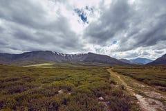 Resa på fötter till och med bergdalarna Skönheten av djurliv Altai vägen till Shavlinsky sjöar vandring Royaltyfria Foton