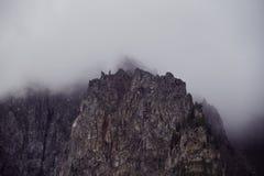 Resa på fötter till och med bergdalarna Skönheten av djurliv Altai vägen till Shavlinsky sjöar vandring Royaltyfri Fotografi