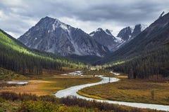 Resa på fötter till och med bergdalarna Skönheten av djurliv Altai vägen till Shavlinsky sjöar vandring Royaltyfri Foto