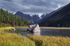 Resa på fötter till och med bergdalarna Skönheten av djurliv Altai vägen till Shavlinsky sjöar vandring Fotografering för Bildbyråer