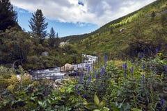 Resa på fötter till och med bergdalarna Skönheten av djurliv Altai vägen till Shavlinsky sjöar vandring Arkivbilder