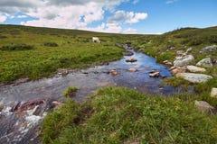 Resa på fötter till och med bergdalarna Skönheten av djurliv Altai vägen till Shavlinsky sjöar vandring Arkivfoton