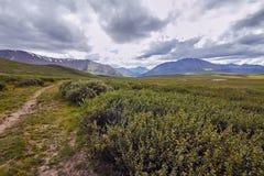 Resa på fötter till och med bergdalarna Skönheten av djurliv Altai vägen till Shavlinsky sjöar vandring Arkivbild