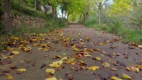 Resa på markplanet som mycket flyttar fram på en höstväg av sidor på de jord- och gula, orange och gröna träden stock video