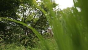 Resa till och med slags tvåsittssoffagräsplanträdgård, avkoppling på semestern, färger av naturen stock video