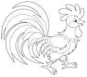 Rooster Royaltyfri Bild