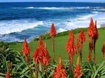 Resaca con los succulents rojos Fotos de archivo libres de regalías