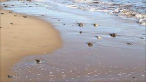 Resaca de la cámara lenta en la playa arenosa almacen de metraje de vídeo
