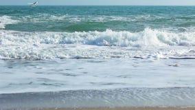 Resaca en la playa y las gaviotas