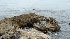 Resaca entre la bahía California de Monterey de la formación de roca almacen de video