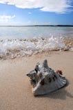 Resaca que salpica en la arena con el shell del mar Fotos de archivo