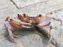 Resan av krabban på golvet Royaltyfria Bilder