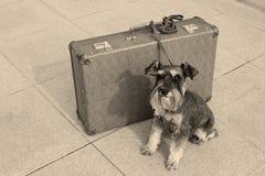Resande hund royaltyfria bilder