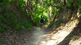 Resande kvinna med ryggsäcken som går på sikt för skogbanabaksida Turist- kvinna som går på banan i rainforestsommar lager videofilmer