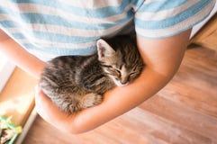 Resbalón del gatito en el brazo del muchacho al aire libre fotografía de archivo