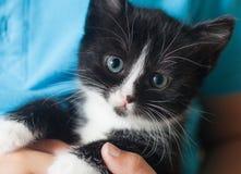 Resbalón del gatito en el hombro del muchacho al aire libre Fotografía de archivo libre de regalías