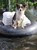 Rescate del perro Fotos de archivo libres de regalías