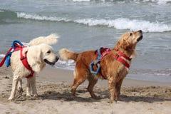 Rescate en el mar con los perros Fotos de archivo libres de regalías