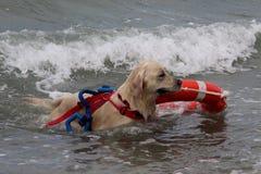 Rescate en el mar con los perros Imagen de archivo libre de regalías