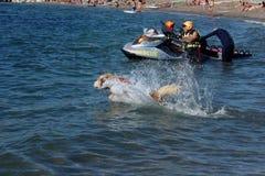 Rescate en el mar con los perros Fotografía de archivo libre de regalías