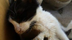 Rescue Cat Stock Image