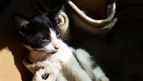 Rescue Cat Stock Photos