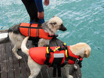 Rescue dog Stock Image