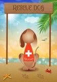 Rescue dog on the beach Royalty Free Stock Photos
