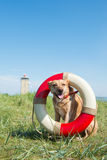 Rescue dog at the coast Stock Images