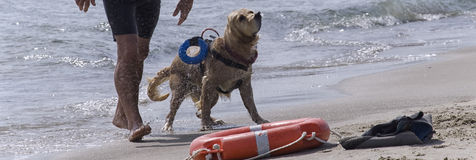 Rescue dog comes out Stock Photos