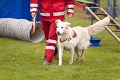Rescue Dog. Of a Dog Squadron Stock Photos