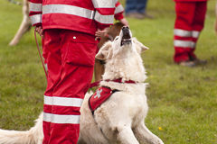 Rescue Dog Squadron Royalty Free Stock Photos