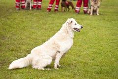 Rescue Dog Squadron Royalty Free Stock Image