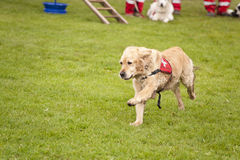 Rescue Dog Squadron Stock Images