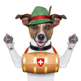 Rescue dog royalty free stock photo