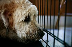 Rescue Me. A cute shaggy dog in kennel looking sad royalty free stock photos